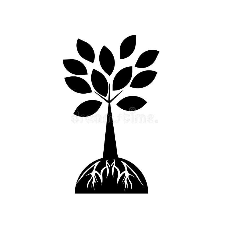 Sinal e símbolo do vetor do ícone da árvore e das raizes isolados no conceito branco do fundo, do logotipo da árvore e das raizes ilustração stock