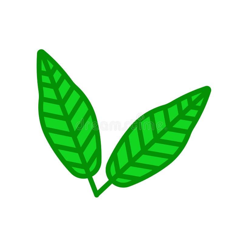 Sinal e símbolo do vetor do ícone da folha do Linden isolados no backgr branco ilustração do vetor