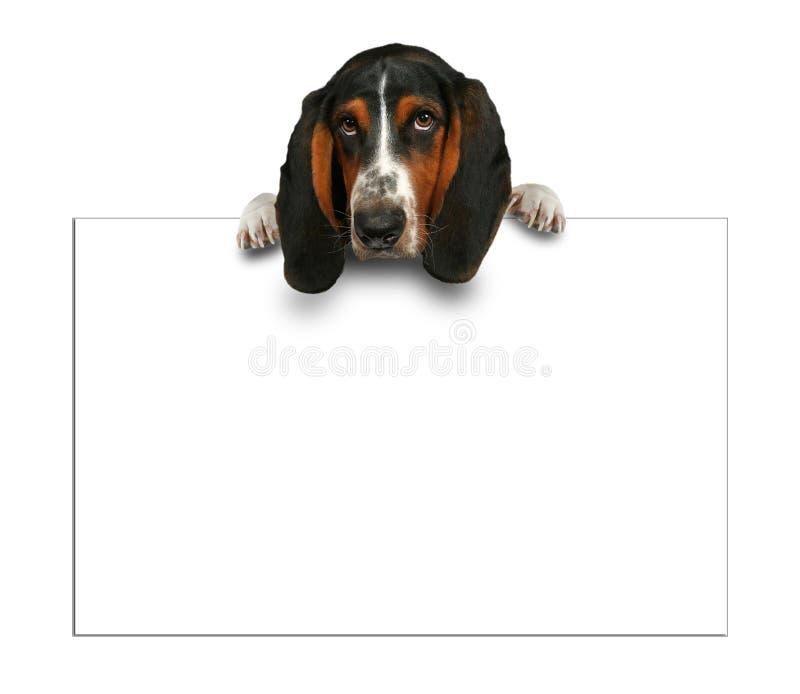 Download Sinal em branco foto de stock. Imagem de hound, furry - 16863282