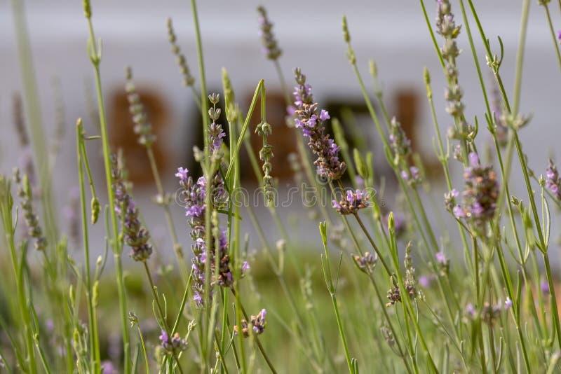 Sinal feito de gramas secadas na propriedade do vinho de Babylonstoren, Franschhoek, África do Sul fotos de stock royalty free