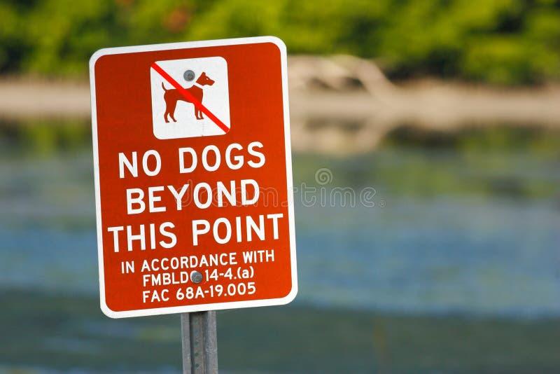 Sinal vermelho nenhuns cães além deste ponto Praia perto da água do mar, Florida, EUA Sinal de aviso na praia Birdwatching em Flo fotos de stock royalty free