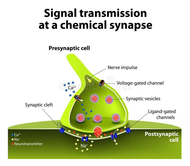 Sinapse química ilustração royalty free