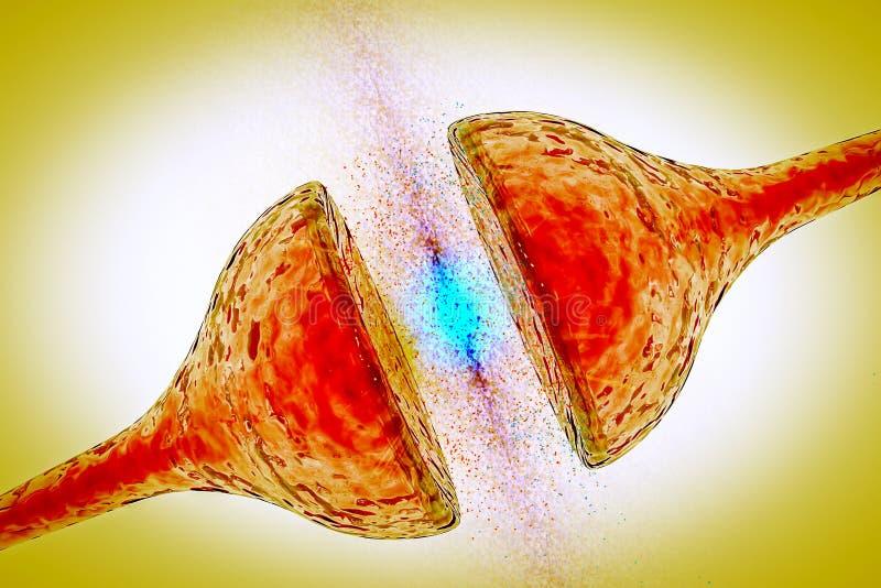 Sinapsis entre la red neuronal de los nervios del vínculo de la neurona de dos de las neuronas receptores de la sinapsis ilustración del vector