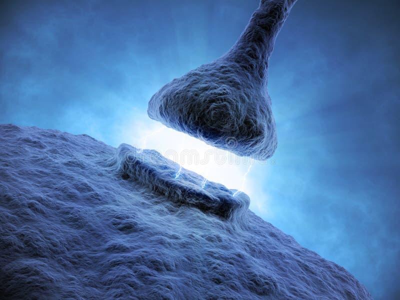 Sinapsis - sistema de los nervios humano stock de ilustración