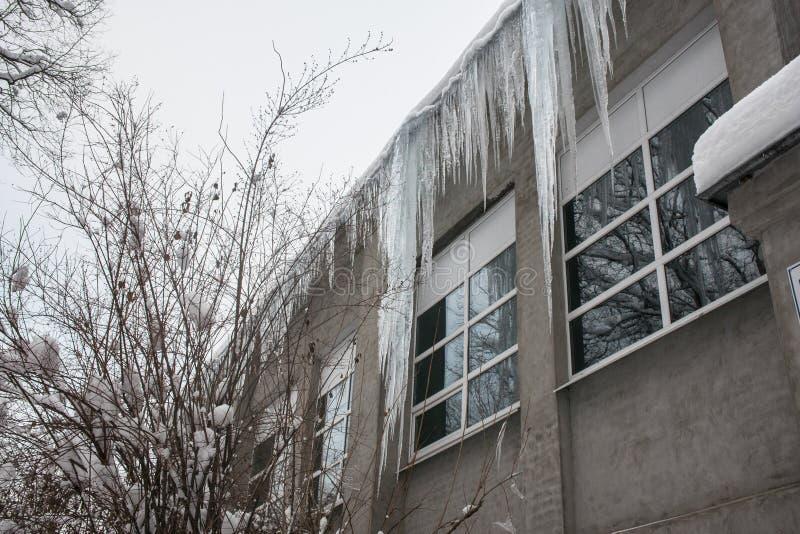 Sincelos enormes no telhado da construção Risco mortal, perigo aos seres humanos imagem de stock