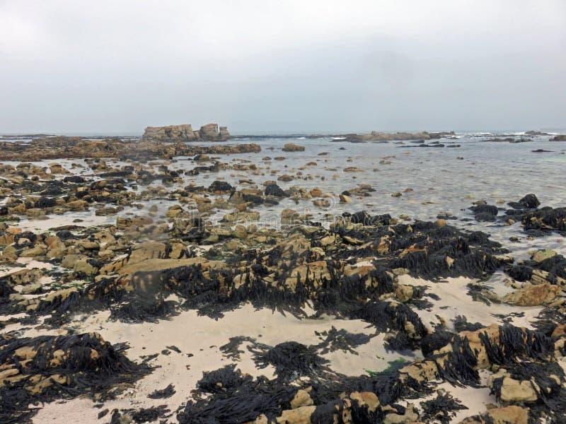 Sinfonía de la mala hierba del mar imagen de archivo