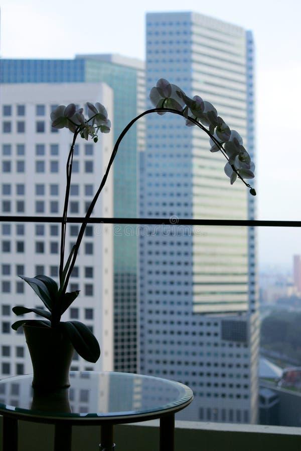 Singapore fotografia de stock royalty free