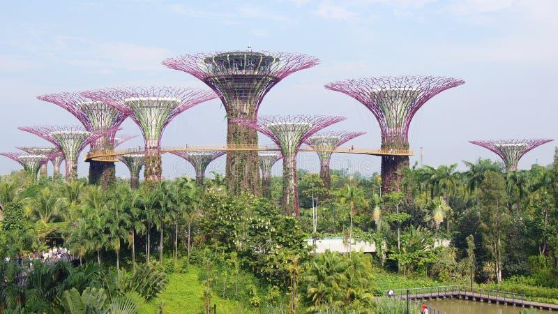 SINGAPORE - APRIL 2nd, 2015: Dagsikt av den Supertree dungen på trädgårdar vid fjärden i Singapore Spänna över 101 hektar royaltyfri foto