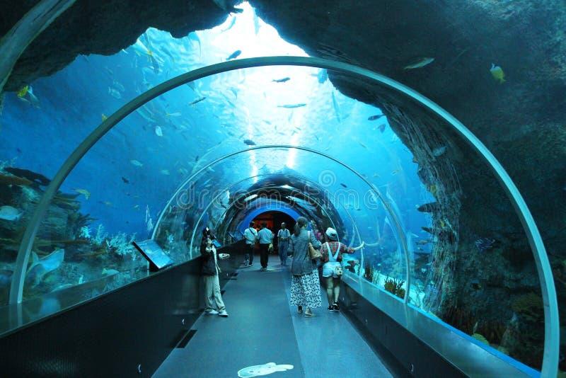 SINGAPORE - APRIL 13, 2016: Oidentifierade besökare på S E En Aqua royaltyfri fotografi