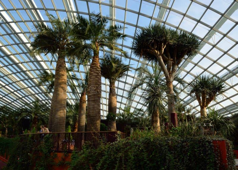 Singapore - April 28, 2014: Palmträd i kupolen av blommor i trädgårdar vid fjärden royaltyfri fotografi