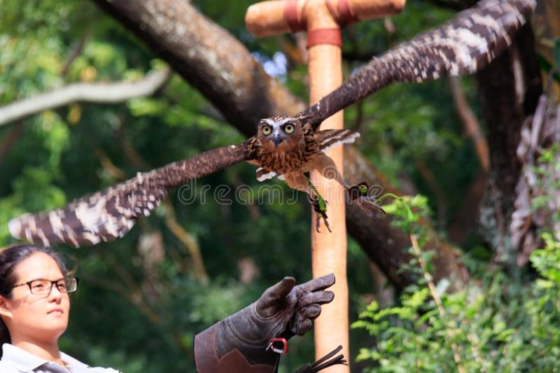 Singapore - AUGUST 06, 2019: Owl stock photography