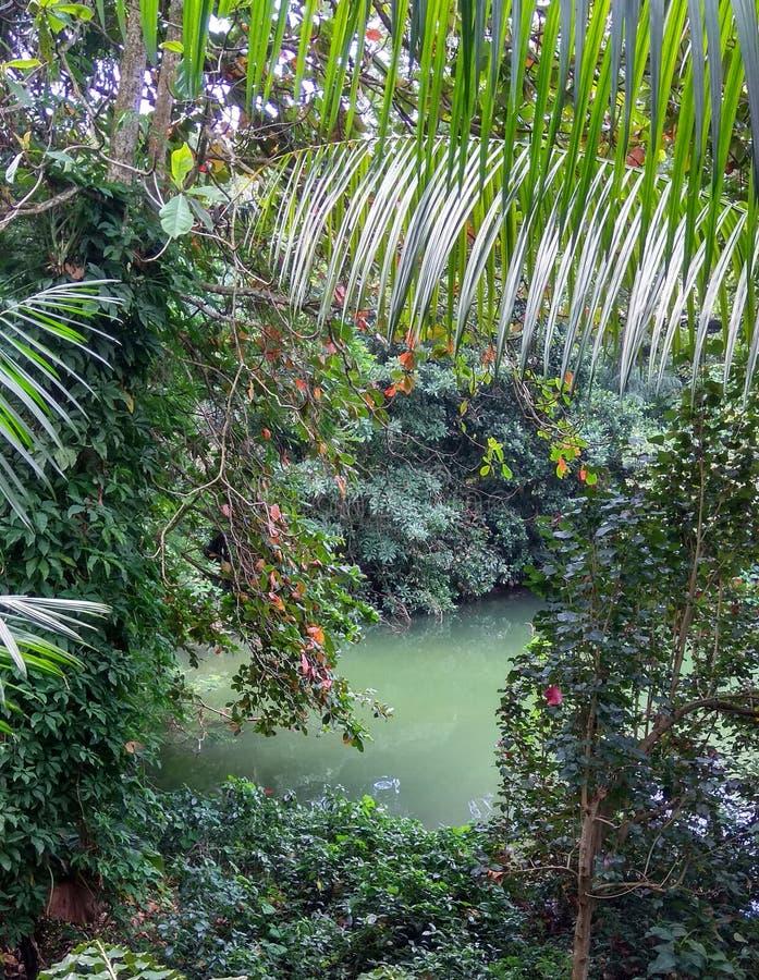 Singapore Singapore Botanic Gardens Lake. A lake at Singapoore in the Botanic Garden, fresh air I loved it stock photography