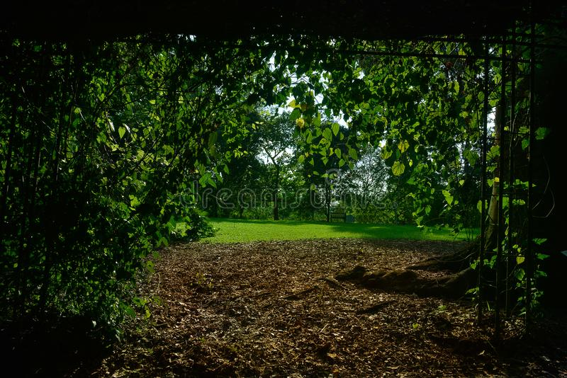 Singapore botanisk trädgårdserie royaltyfria bilder