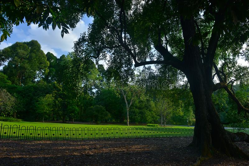 Singapore botanisk trädgårdserie arkivfoto