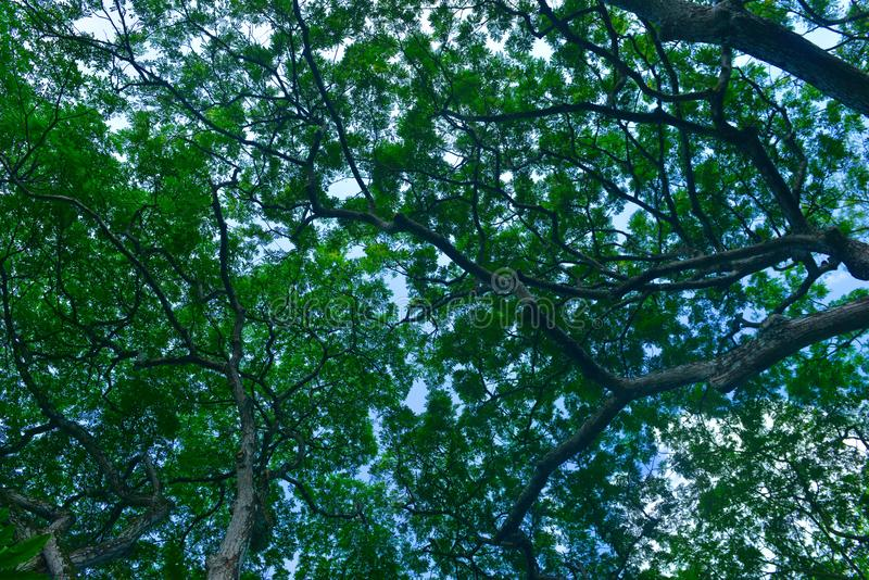 Singapore botanisk trädgårdserier - arkivbilder