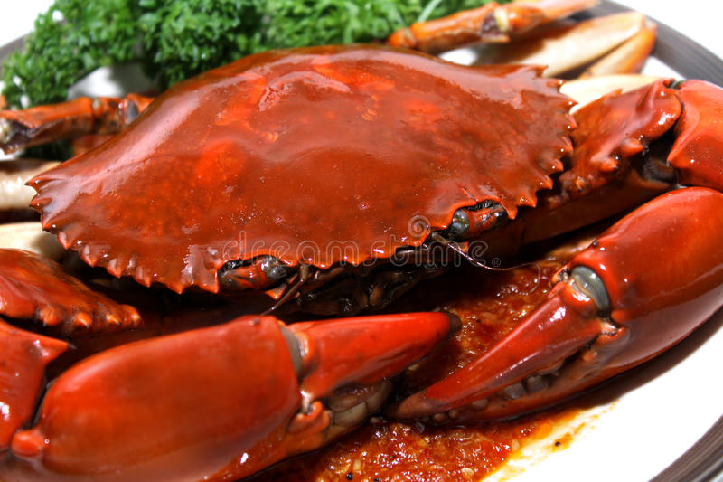 Singapore Chilli Mud Crab royalty free stock image