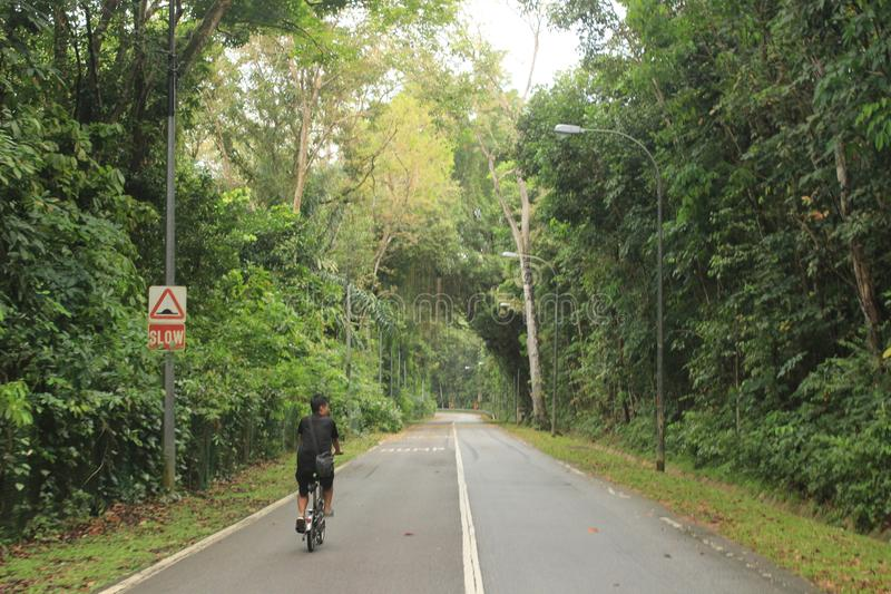 Bicyclist in Singapore park nature reserve royalty free stock photo