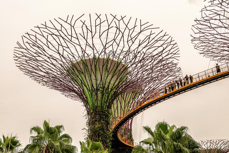 Supertrees, Supertree Grove at Gardens by the Bay in Singapore. Singapore - Jan 14, 2018: Tourists walking on platform on Supertree Grove, Vertical gardens royalty free stock photography