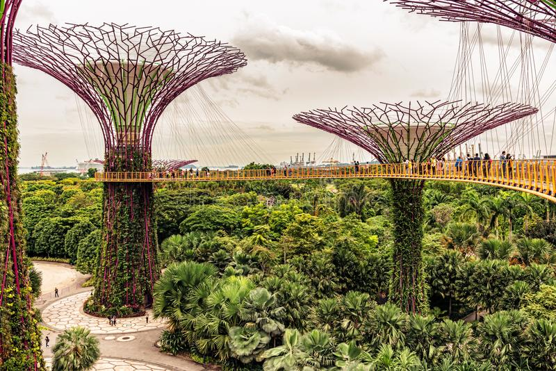 Supertrees, Supertree Grove at Gardens by the Bay in Singapore. Singapore - Jan 14, 2018: Tourists walking on platform on Supertree Grove, Vertical gardens royalty free stock photo