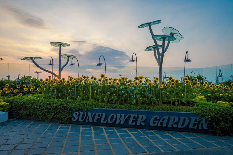 SINGAPORE, SINGAPORE - JANUARI 30, 2018: Openluchtmening van de Zonnebloemtuin binnen van de Luchthaven van Singapore Changi stock fotografie