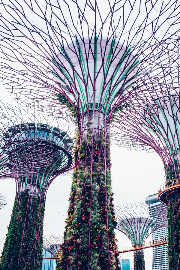 SINGAPORE, SINGAPORE - MAART 2019:Supertree Grove & OCBC Skyway at Garden by the Bay royalty-vrije stock fotografie