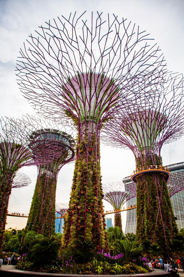 SINGAPORE, SINGAPORE - MAART 2019:Supertree Grove & OCBC Skyway at Garden by the Bay royalty-vrije stock foto