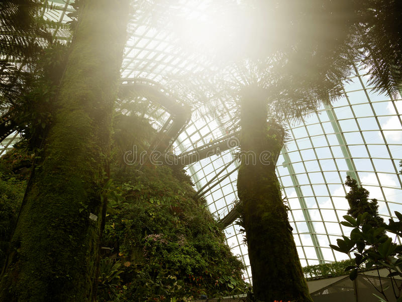 SINGAPORE - MARCH 27, 2016: Backlited Cloud Forest at Gardens by the Bay, Singapore stock images