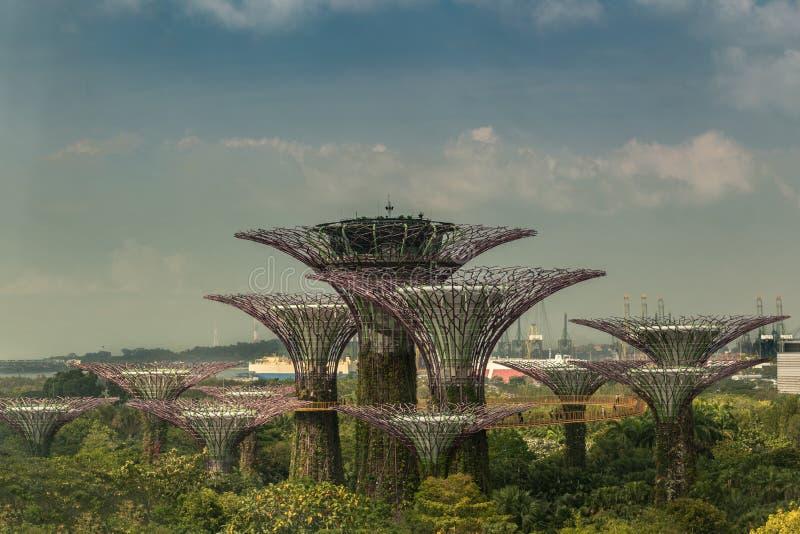 Supertree Grove in Marina Bay Gardens, Singapore royalty free stock photos