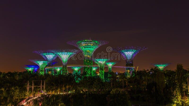 SINGAPORE -21 NOVEMBER 2016: Supertrees exponerade för ljus show i trädgårdar vid fjärden i nattetid arkivfoton