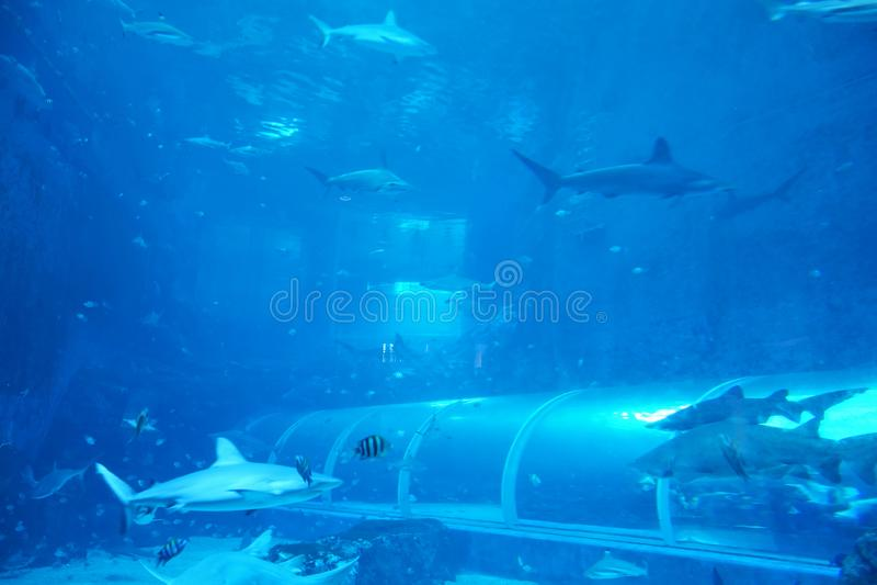 SINGAPORE - 14 October 2018 : Unidentified visitors at S.E.A Aquarium, Singapore. It is largest aquarium in Asia featuring 800 spe stock image