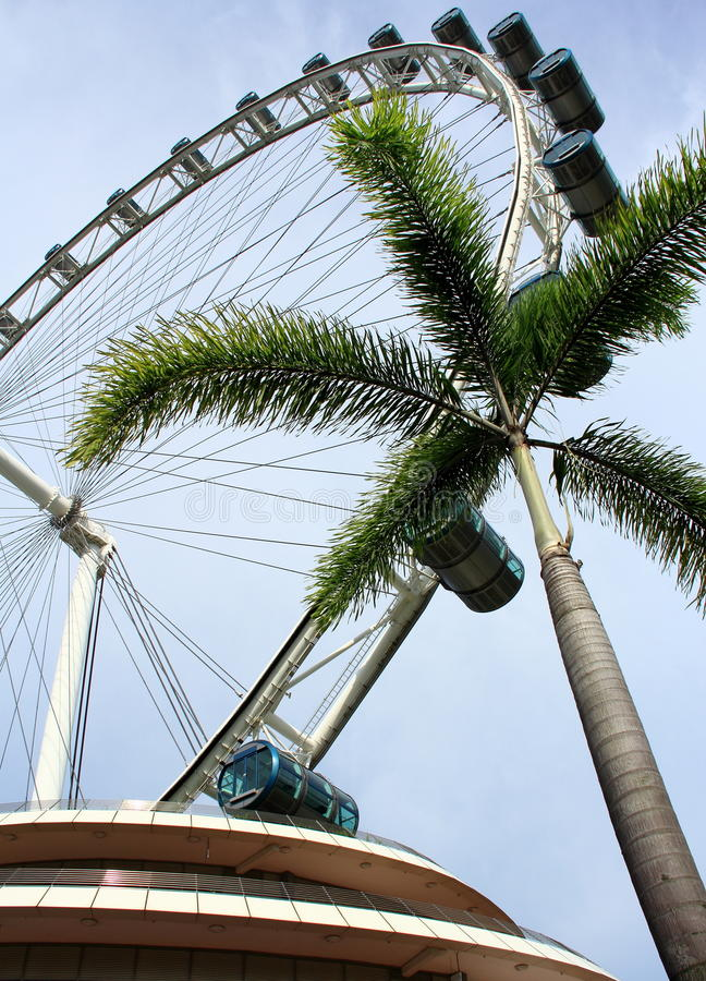 Singapore sky flyer and tree. Singapore Flyer - the Largest Ferris Wheel in the World royalty free stock image