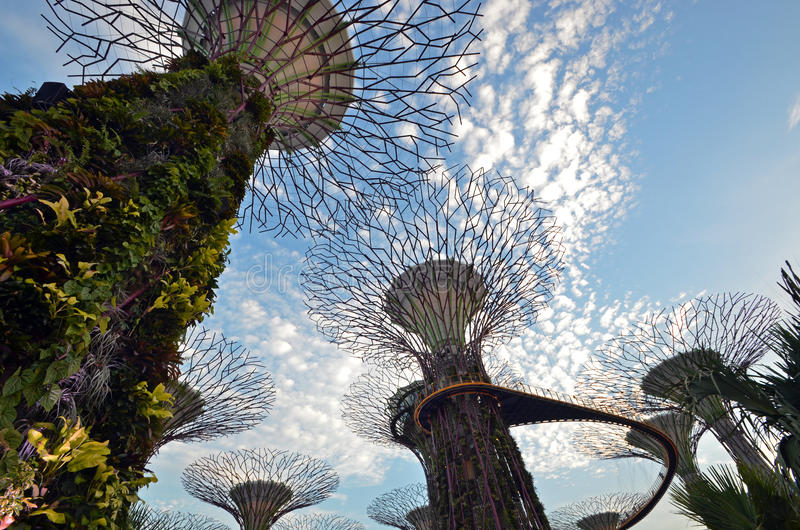 Singapore Super Trees. Super Trees Structures at Singapore's Gardens By the Bay. These ultra modern structures are between 25 metres (82 ft) and 50 metres, and stock photos