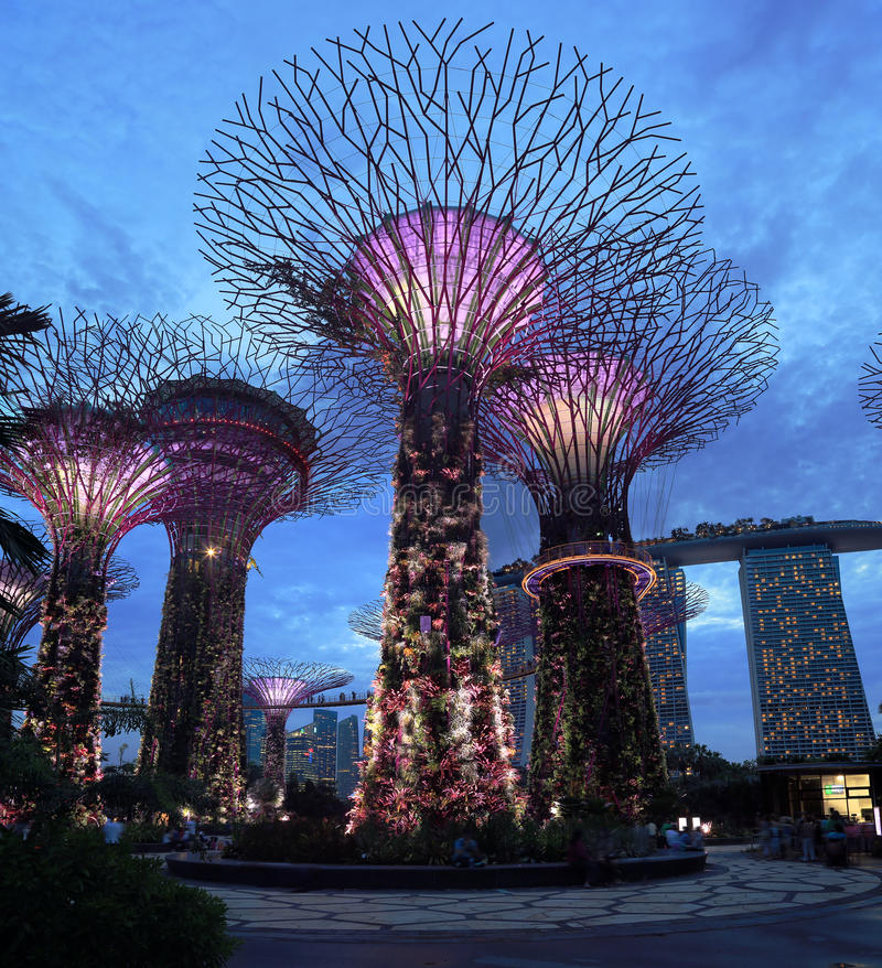 Singapore Supertrees. The Singapore Supertrees in Gardens by the Bay, Singapore, with Marina Bay Sands casino resort in the background stock photos
