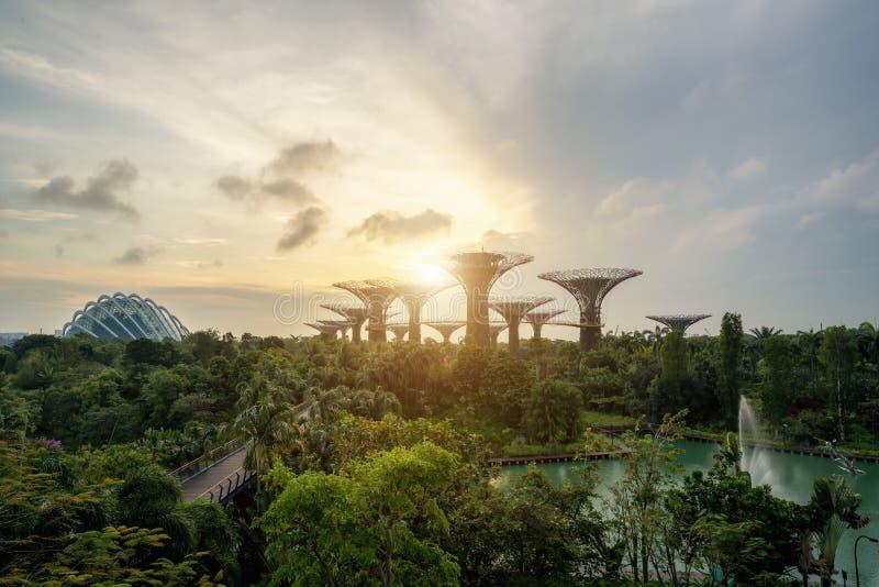 Singapore Supertrees in giardino dalla baia nel moring alla baia del sud fotografia stock
