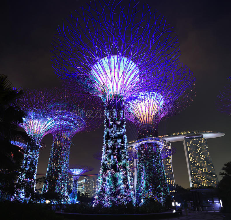 Singapore Supertrees. The Singapore Supertrees in Singapore, with Marina Bay Sands in the background royalty free stock photos