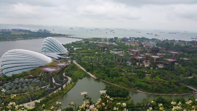 Singapore trädgårdar av fjärden och Marina Barrage royaltyfria foton