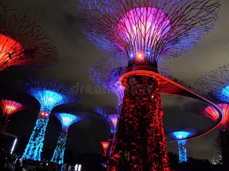 Singapore tr?dg?rdar vid fj?rden fotografering för bildbyråer