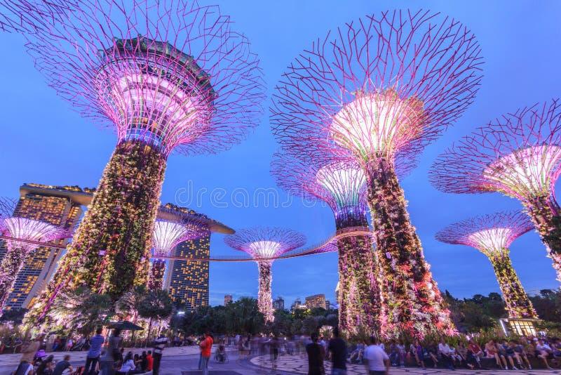 Singapore, Tuinen door de Baai, Super Boombosje stock fotografie