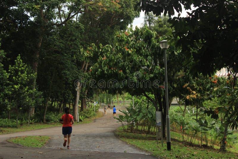 Joggers in Bishan Ang Mo Kio Park in Singapore royalty free stock images