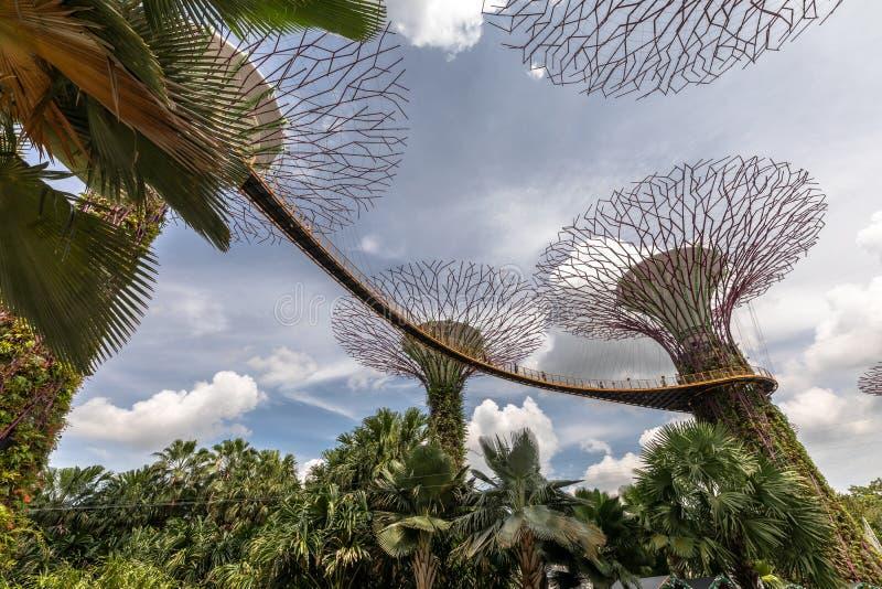 Singapour - décembre 2018 : L'OCBC Skyway, jardins par la baie image stock
