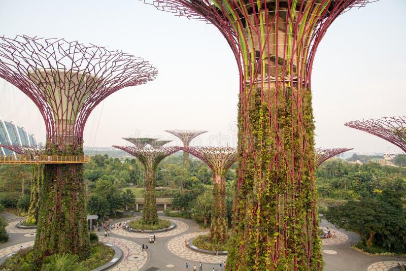 Singapour - jardins par la baie photo libre de droits