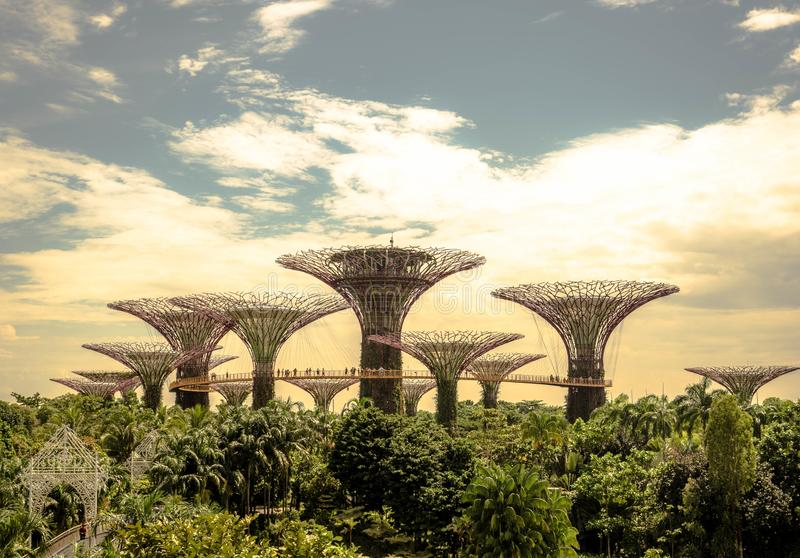 Singapour - 24 novembre 2018 : La vue du point de repère de Supertree au jardin par la baie est le parc célèbre et extérieure de  photographie stock libre de droits