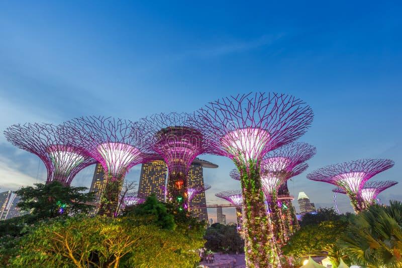SINGAPOUR 25 septembre 2017 : Vue de nuit de verger superbe d'arbre dans la rhapsodie de jardin photos stock