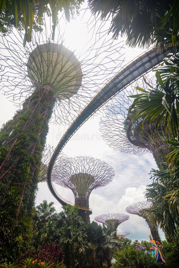 Singapour - 8 septembre 2018 - vue verticale de l'OCBC Skyway dans le verger de Supertree aux jardins par la baie image libre de droits