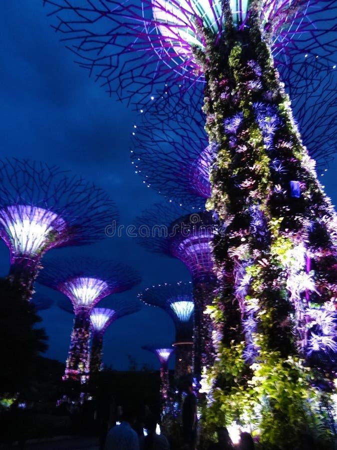Singapour Supertrees dans les jardins par la baie images libres de droits