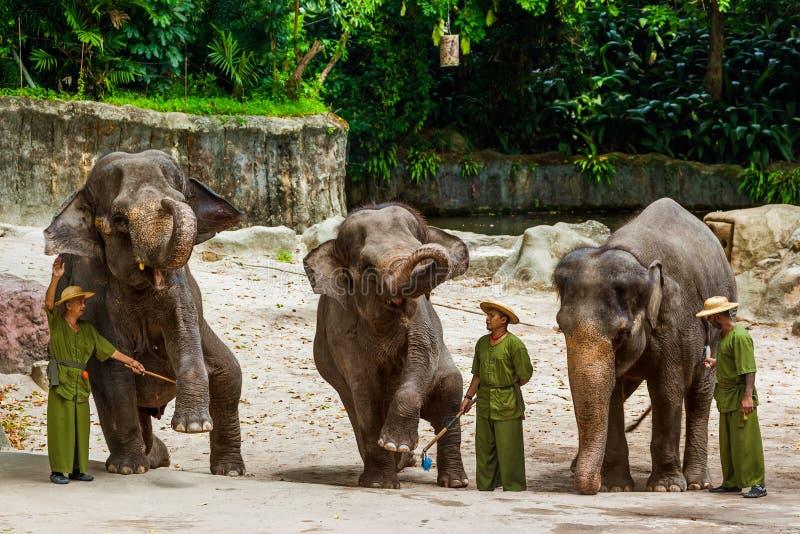 SINGAPUR - 14 DE ABRIL: Demostración del elefante en el parque zoológico de Singapur el 14 de abril fotografía de archivo libre de regalías