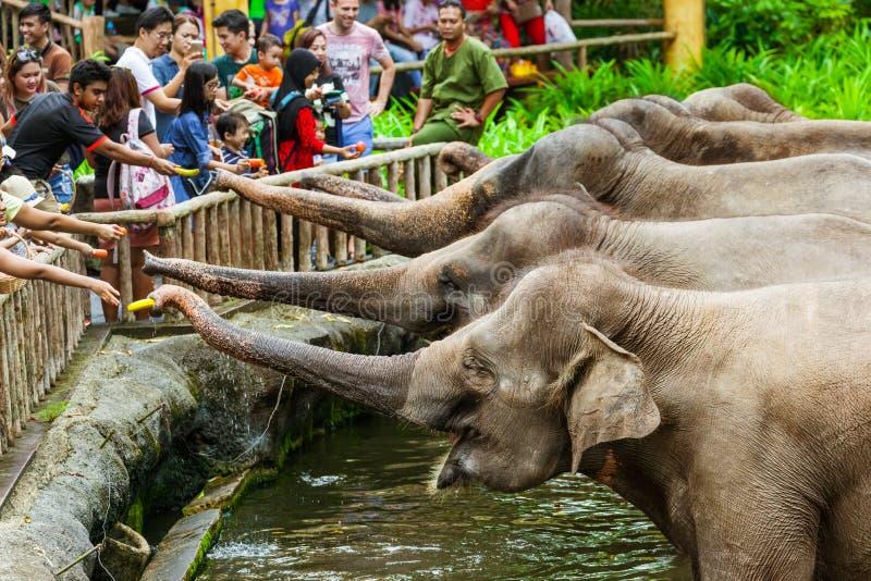 SINGAPUR - 14 DE ABRIL: Demostración del elefante en el parque zoológico de Singapur el 14 de abril imagen de archivo libre de regalías