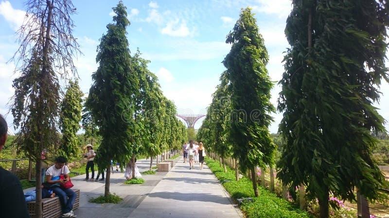 Singapur En noviembre de 2018 Marina Bay Overpass Puente que camina de las arenas de la bahía del puerto deportivo a los jardines imagen de archivo