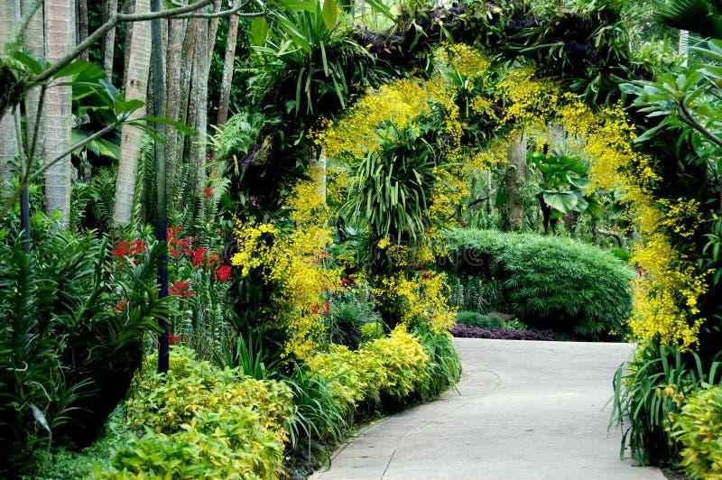 Singapur: Jardín nacional de la orquídea imágenes de archivo libres de regalías