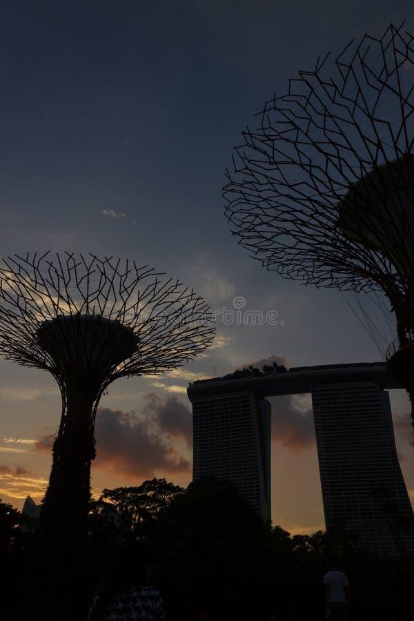 Singapur, Singapur - 28. März 2016: Supertrees belichtete für helles Zeigung in den Gärten durch die Bucht lizenzfreie stockbilder